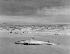 Exhibition: Mayk Wendt – Der Ausstieg: der hohe Norden Neuseelands