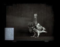 Exhibition: IL FOTOGRAFO DEI PICCIONI – Julius Neubronner & i suoi piccioni