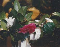 Exhibition: Marilú Eustachio – Heimat 2